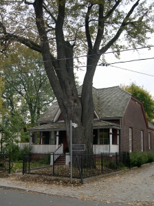 Maple Cottage with its famous tree